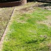 草むしり お庭手入れ